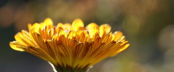 Maux de l'hiver : soignez-les grâce à l'homéopathie